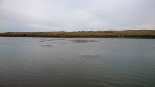 weedy lake 3